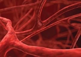 Quanto sono lunghi i vasi sanguigni?
