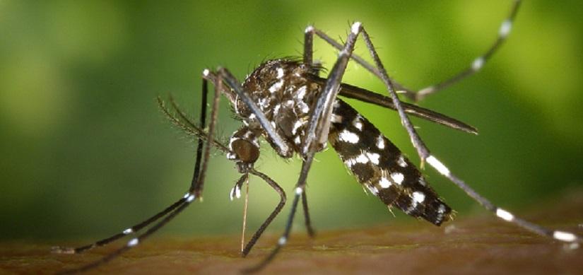 Addio zanzare: 3 soluzioni efficaci per preservare il sangue dalle infezioni