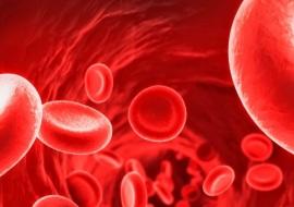 Malattia di Glanzmann: ecco tutto quello che c'è da sapere