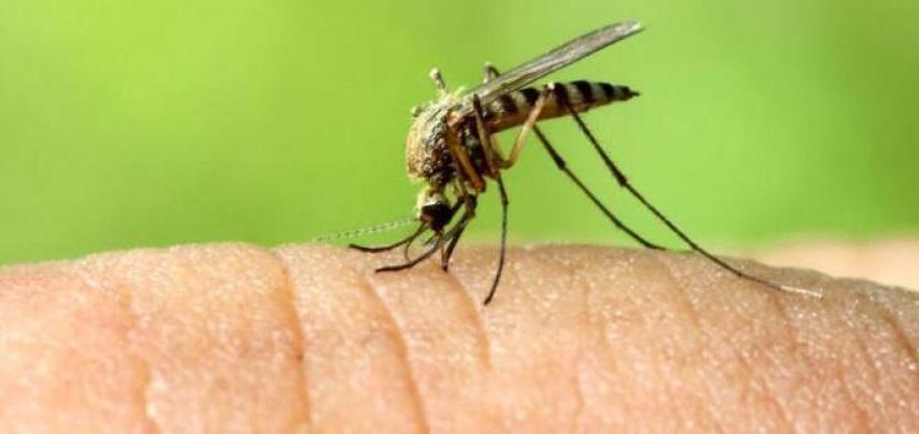 Virus Dengue: ecco in quali paesi stare attenti